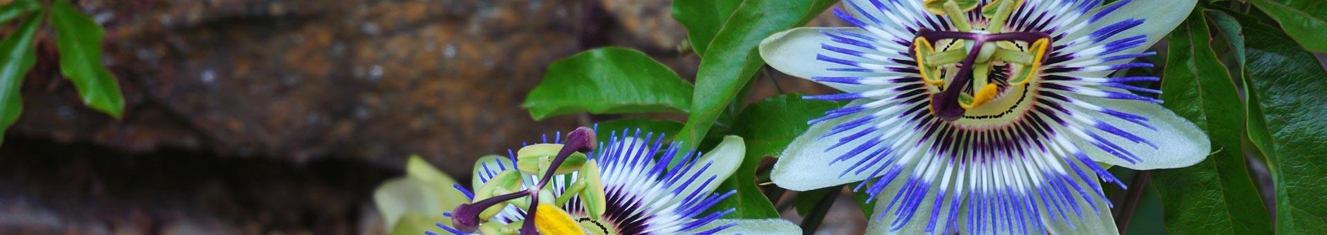 Natur Krug in Deggendorf - Kräuter und Heilpflanzen