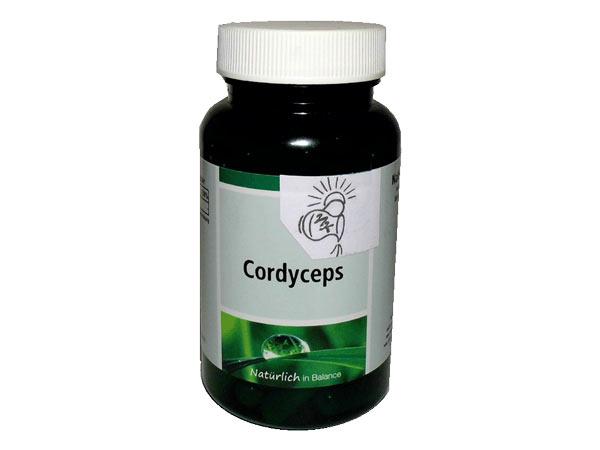 Cordyceps Vitalpilze gegen Stress, Depressionen und mehr