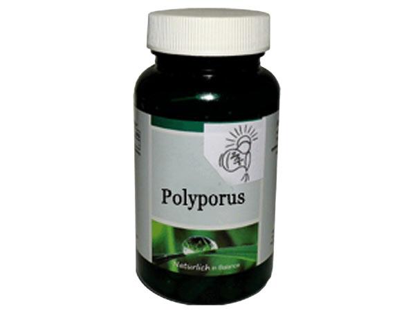Polyporus für gesundes Haarwachstum